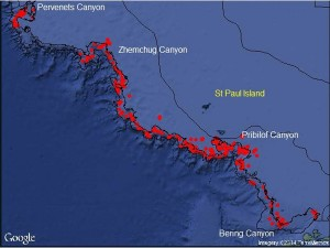 This summer, NOAA Alaska Fisheries Science Center completed the first comprehensive camera survey targeting corals on the eastern Bering Sea outer shelf and slope.