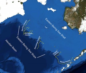 The Bering Sea, and the larger of the Bering Sea Canyons. Image courtesy of NOAA.